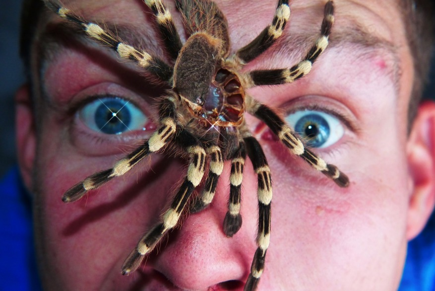 Spider crawling on a terrified man's face