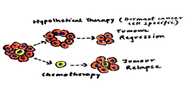 Hypothetical (Dormant cell specific) Therapy: Cell with self renewal potential is removed promoting tumour regression. No such occurrence is observed in standard chemotherapy techniques.